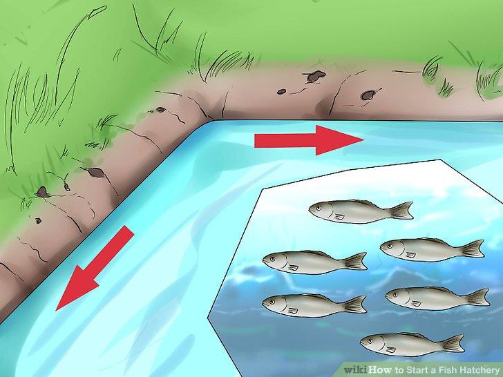 Lagern Sie den Teich entsprechend seiner Größe.