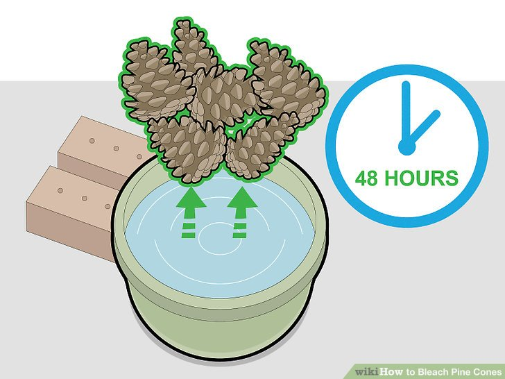 Remove the pine cones after 48 hours.