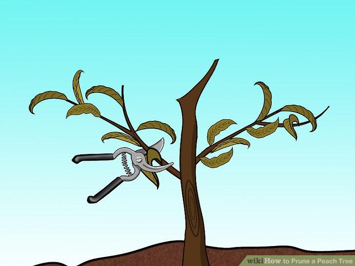 Beschneiden Sie Ihre Bäume in der Nähe der Basis des Zweigs.