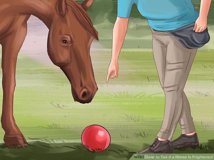 Desensibilisieren Sie Ihr Pferd für harmlose Dinge, die ihm Angst machen.