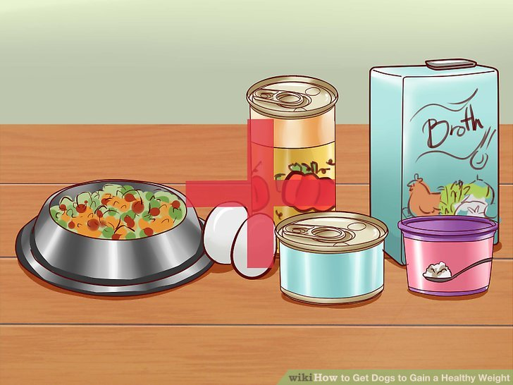Ergänzen Sie das Futter des Hundes mit angemessenem menschlichen Futter.