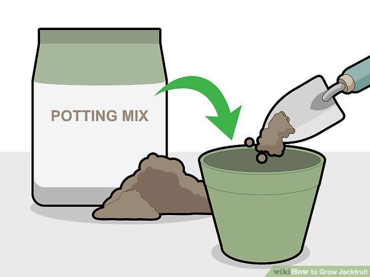 Fill your seedling pot with organic potting mix.