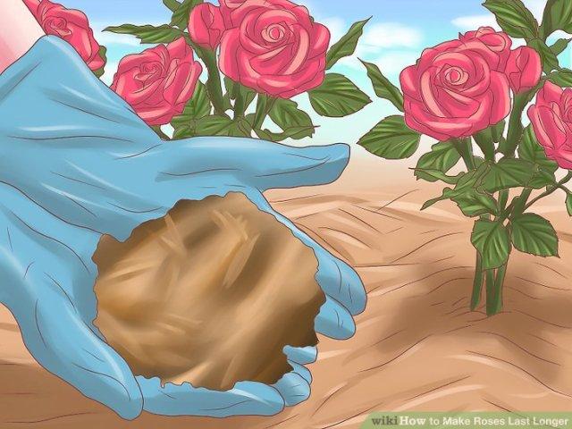 Make Roses Last Longer Step 11.jpg