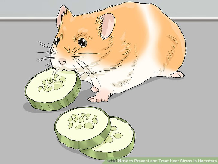 Entwässere deinen Hamster.