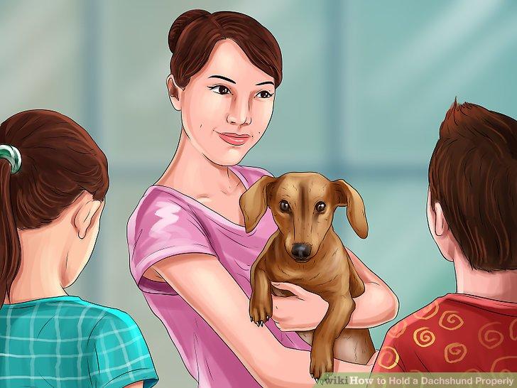 Zeigen Sie Familie und Freunden, wie man Dachshunde ordentlich hält, bevor er sie spielen lässt.