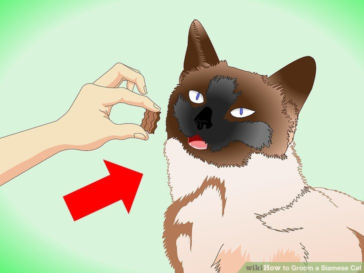 Bieten Sie Ihren Siamesen kleine Leckereien nach den Putzsitzungen an.