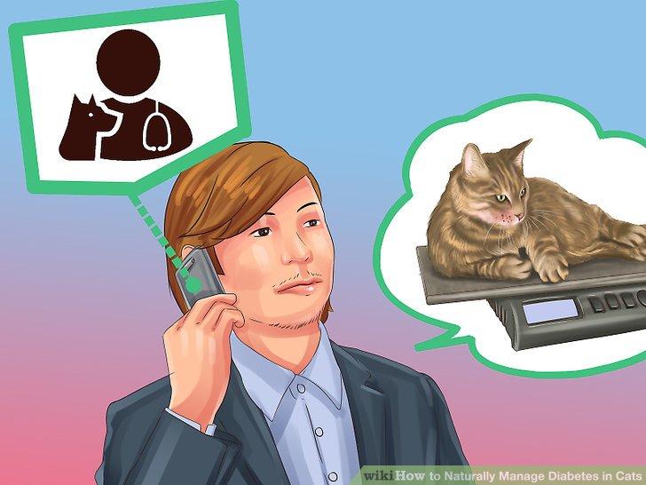 Helfen Sie Ihrer Katze, Gewicht zu verlieren.