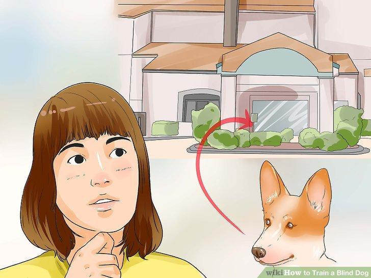 Halten Sie Ihren Hund die meiste Zeit im Haus.