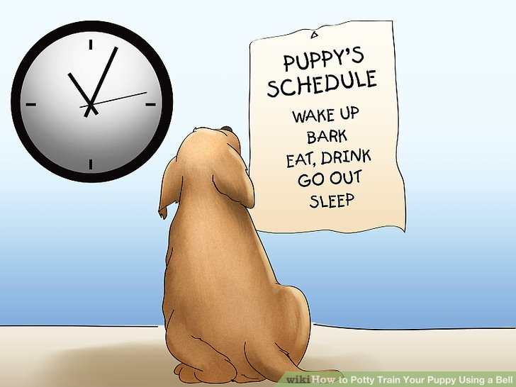 Understand the importance of a schedule.