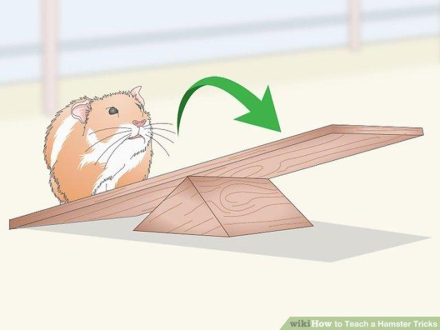 Teach a Hamster Tricks Step 11 Version 2.jpg