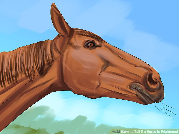 Analysieren Sie die Situation, wenn Ihr Pferd quietscht.