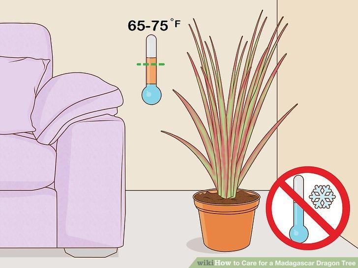 Halten Sie die Temperatur um 24 ° C (75 ° F), außer im Winter.
