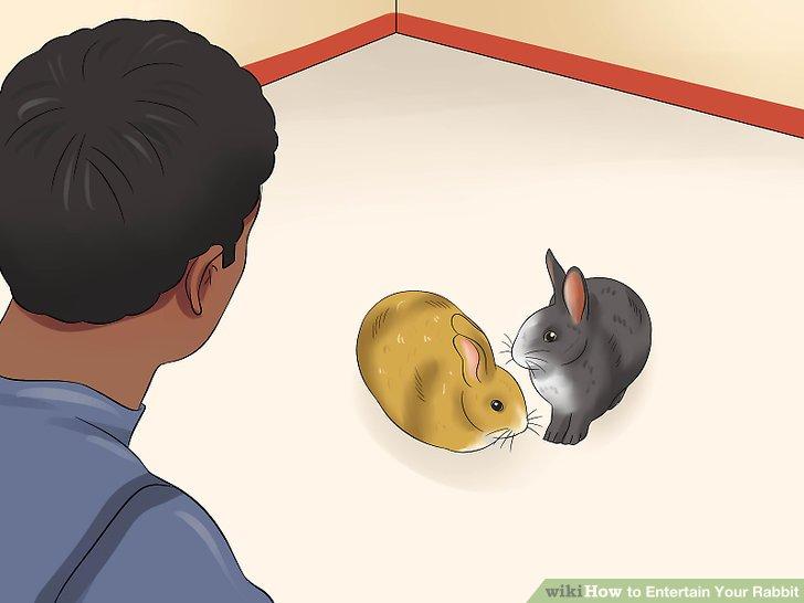 Kaninchen schrittweise einführen.