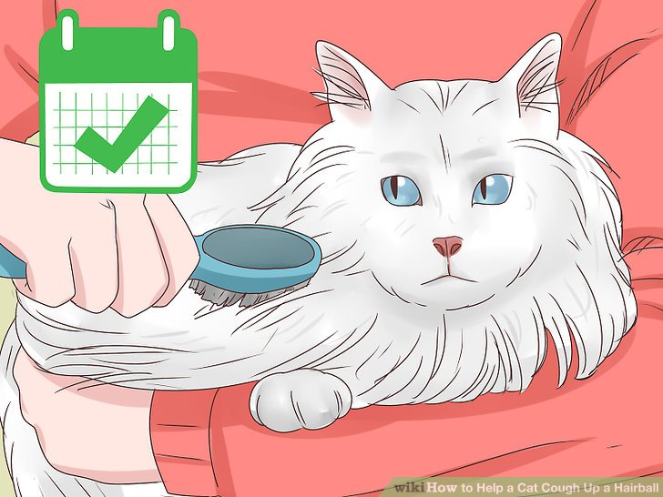 Comb and brush long-haired cats daily to avoid hairballs.