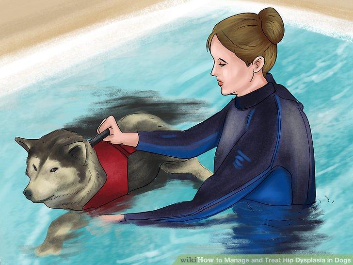 Melden Sie Ihren Hund für die Physiotherapie an.
