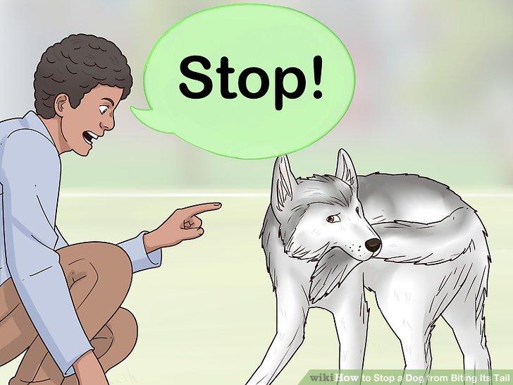 Verwenden Sie grundlegende Befehle, um das Schwanzbeißen zu stoppen.