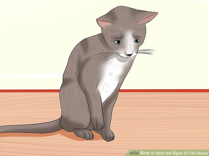 How to Spot the Signs of Cat Abuse - Practical Information