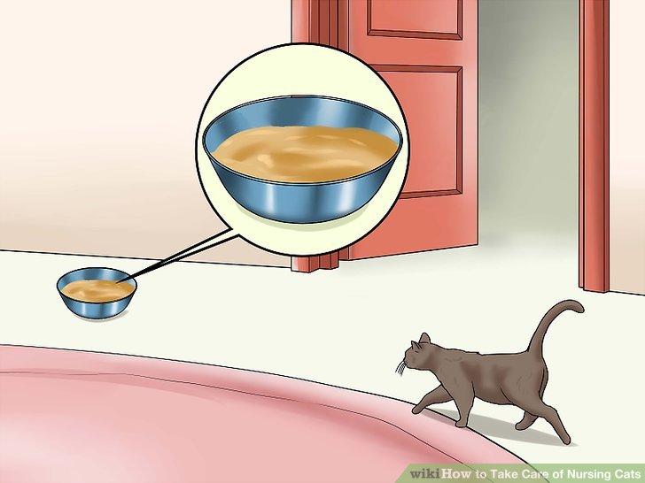 Geben Sie Ihrer Katze freien Zugang zu Futter.