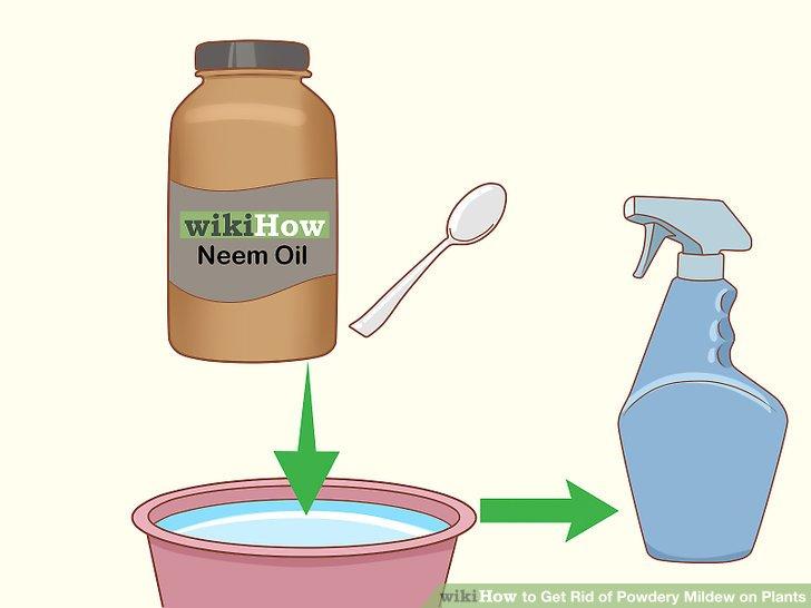 Versuchen Sie eine Neem-Öl-Lösung.