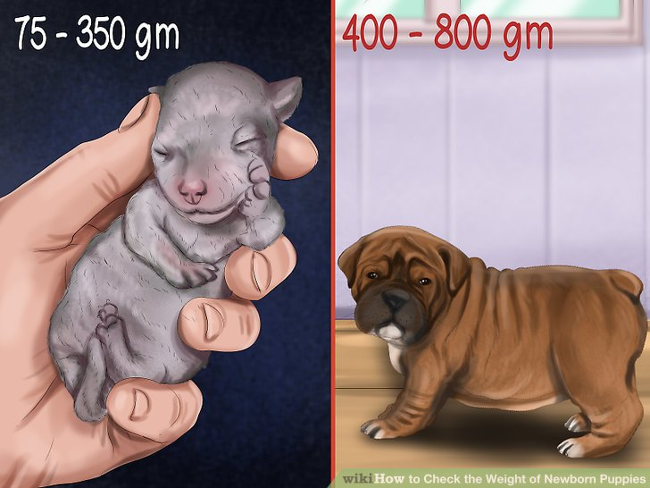 Recognize proper birth weights.