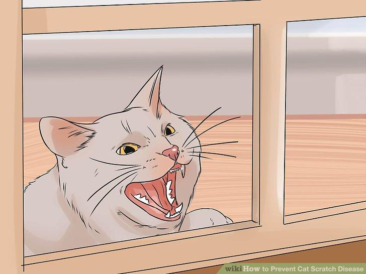 Kedinizi içeride tutun.