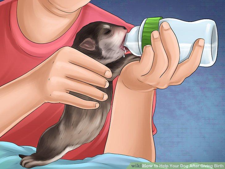 Monitor the nursing puppies.