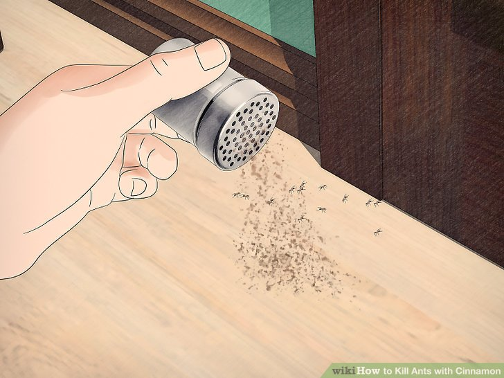 Kill Ants with Cinnamon Step 1.jpg