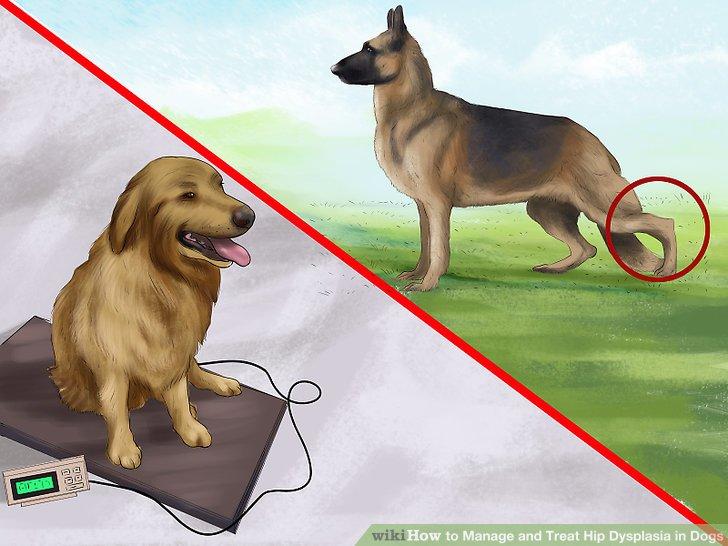 Kontrollieren Sie das Gewicht Ihres Hundes, um diesen Zustand zu kontrollieren.