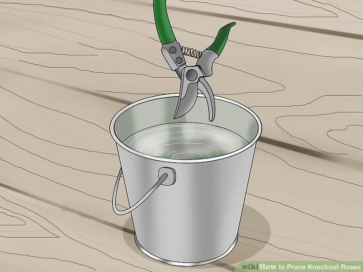 Desinfizieren Sie Ihre Gartenschere, bevor Sie loslegen.