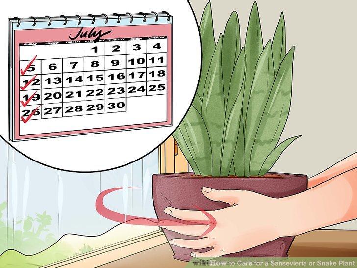 Drehen Sie den Pot Viertelwechsel pro Woche für gleichmäßige Belichtung.