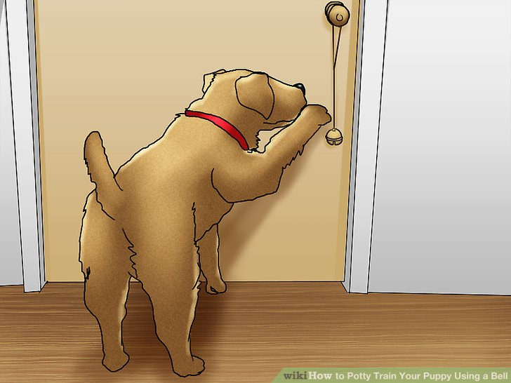 Teach the puppy to ring the bell himself.