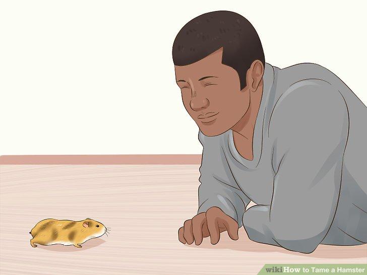Interagieren Sie weiter mit Ihrem Haustier.