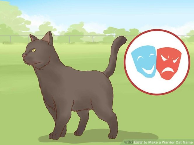 stop cat urinating in house