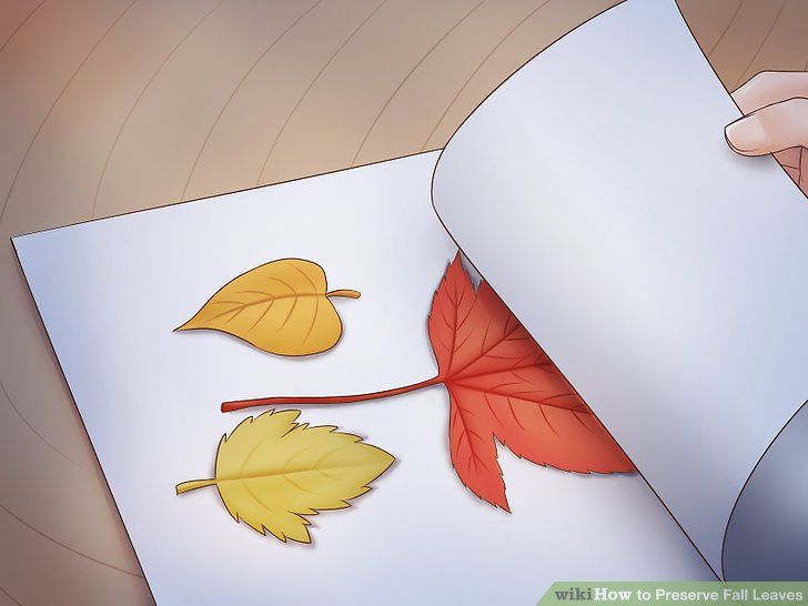 Seal the leaves with craft spray.