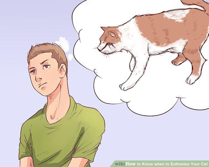 Bestimmen Sie den Körperwert Ihrer Katze.