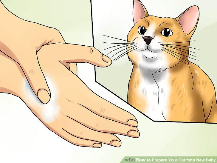 Bereiten Sie Ihre Katze auf Babygerüche vor.