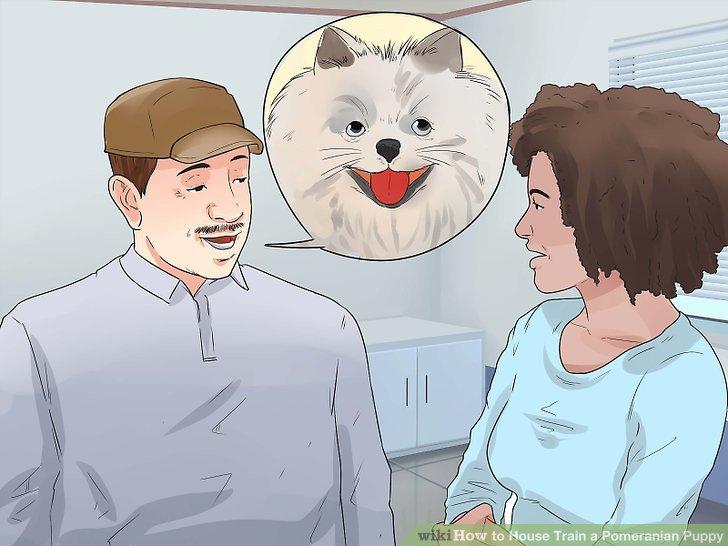 Wenden Sie sich an einen zertifizierten professionellen Hundetrainer.