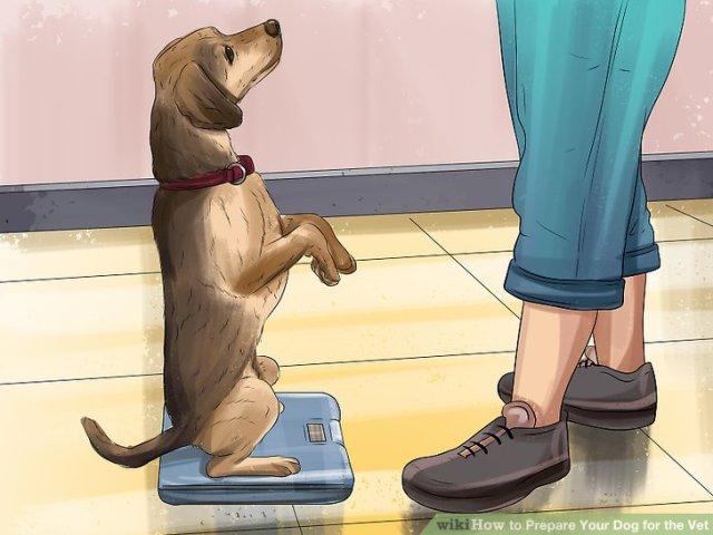 Prepare Your Dog for the Vet Step 5 Version 2.jpg