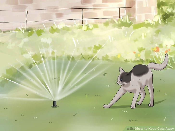 Installieren Sie bewegungsaktivierte Sprinkler.