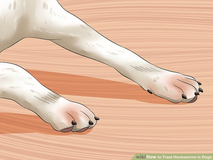 Look for signs your dog has itchy feet.