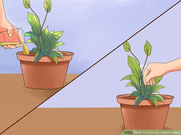 Mantar bulaşmış bir bitkiyi temizleyin veya atın.
