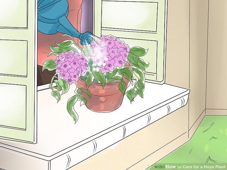 Gießen Sie Ihre Pflanze am Morgen.