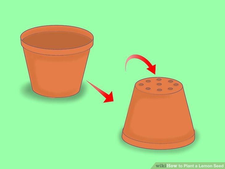 Wählen Sie einen kleinen Topf mit Drainagelöchern.