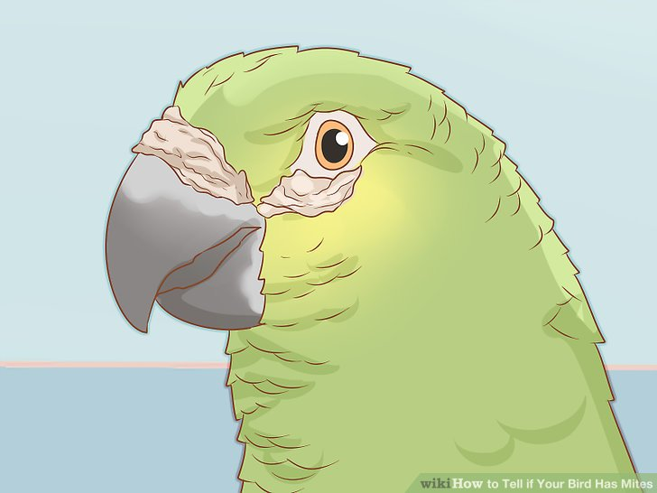 Check around your bird's eyes and beak for any crusty looking area.