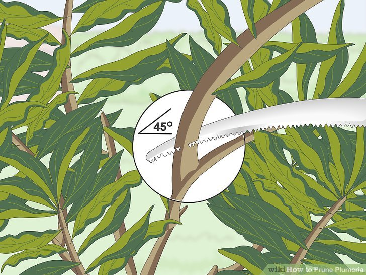 Make your cuts at a 45° angle to the branch.