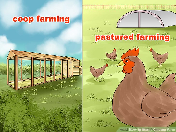 Entscheiden Sie, ob Sie Coop-Landwirtschaft oder Weideland betreiben.