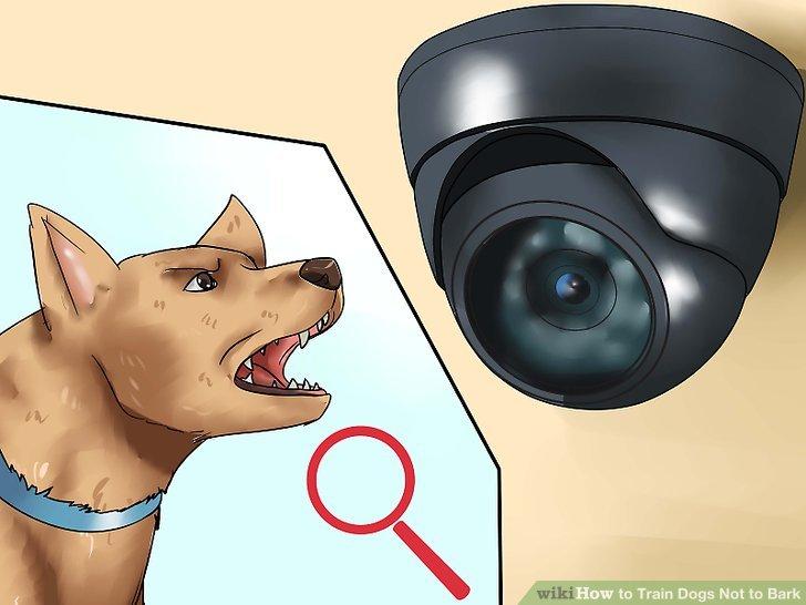 Untersuchen Sie das Bellen Ihres Hundes.