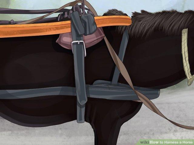 Harness a Horse Step 13 Version 4.jpg