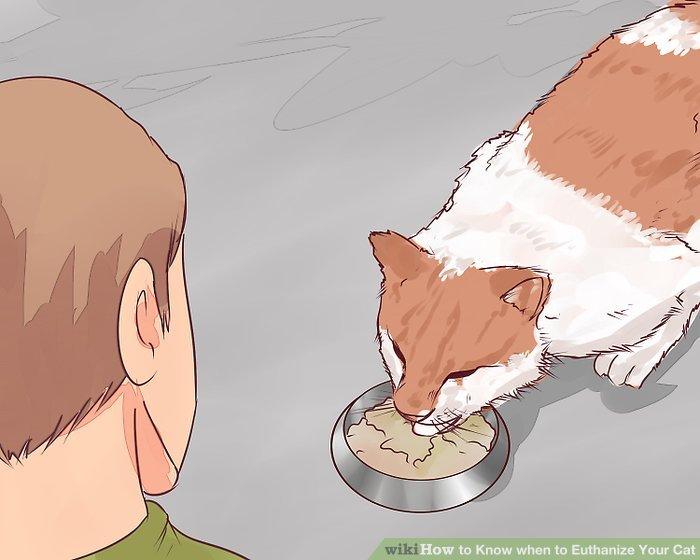 Betrachten Sie das Gewicht und die Fähigkeit Ihrer Katze zu essen.
