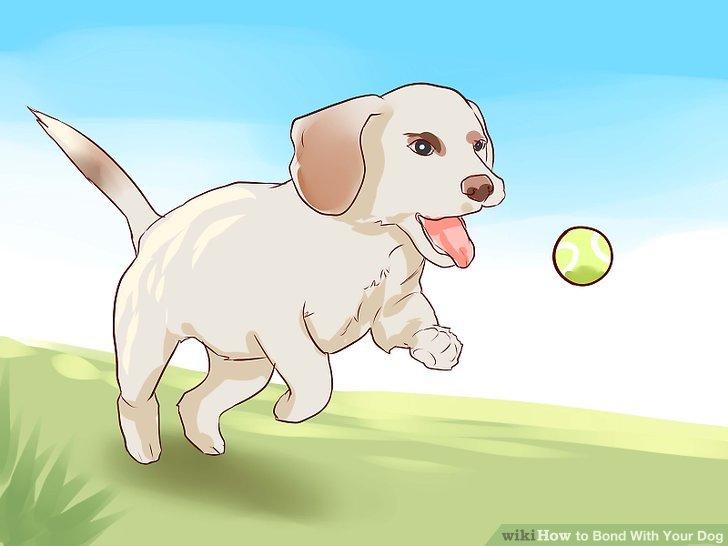 Machen Sie Tricks mit Ihrem Hund.